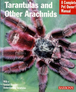 Tarantula_And_Other_Arachni.jpg